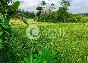 Land for sale Kosgoda. in Balapitiya