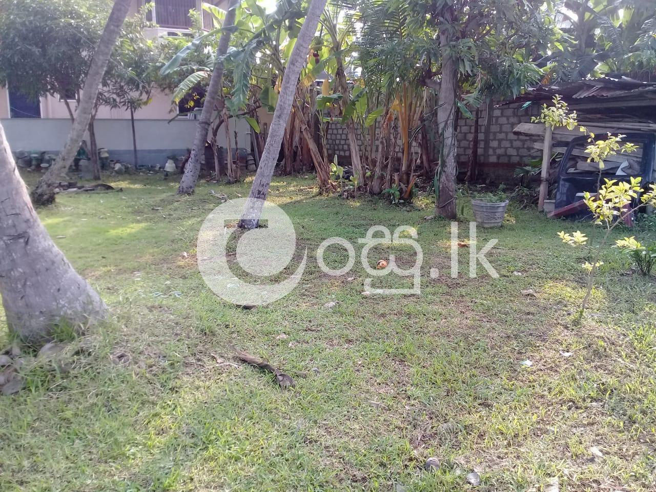 Valuable 17 Perch Coconut Land  Land in Negombo