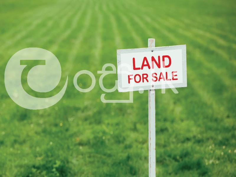 Highly Residential Land for Sale in Kuliyapitiya Land in Kuliyapitiya