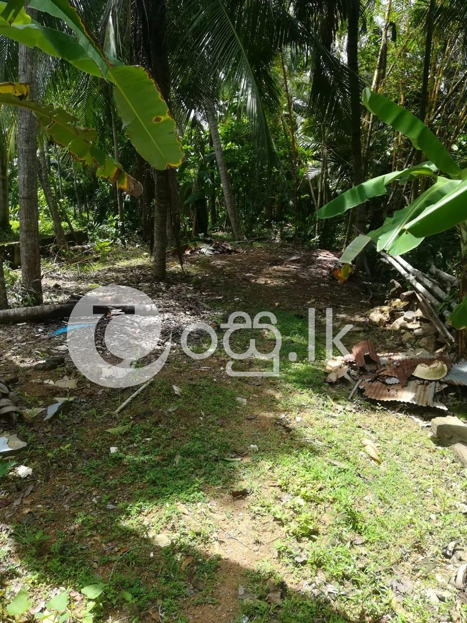 Land for Sale in   Galle Land in Galle