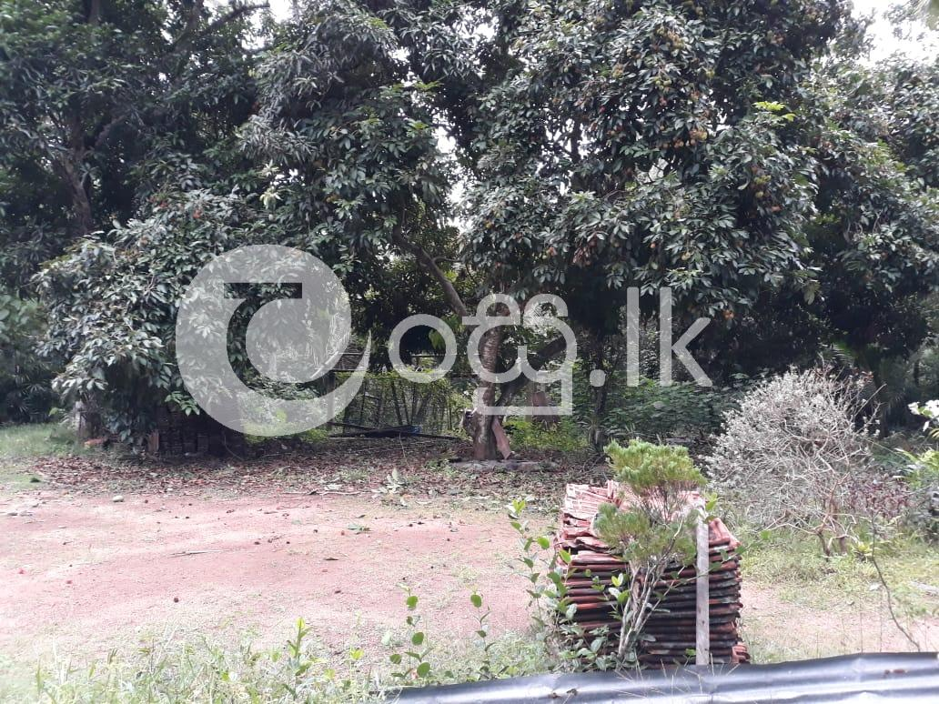 Urgent Sale For Land In Mirigama Land in Mirigama