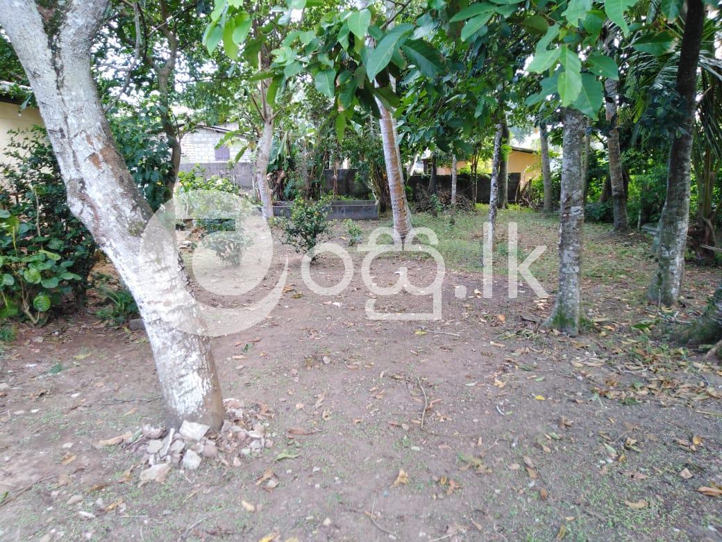 Land For Sale In Panadura Land in Panadura