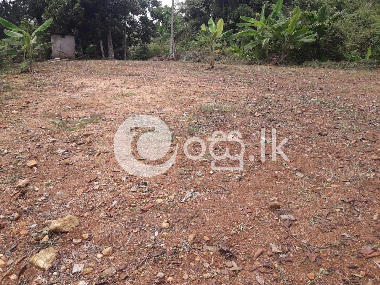 Prime Residential Land for Sale in Homagama in Homagama