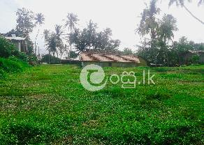 Sea Faced Land for Sale   Balapitiya in Ambalangoda