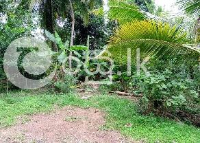 A Precious 12 Perch Square Land in Kandana