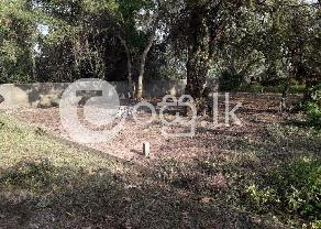 Land for sale in Ja Ela. in Ja Ela