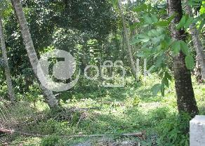 Land For Sale Colombo Kosgama in Avissawella