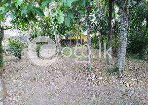 Land For Sale In Panadura in Panadura
