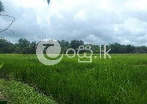 Land For Sale In Baddegama near Balagoda in Baddegama