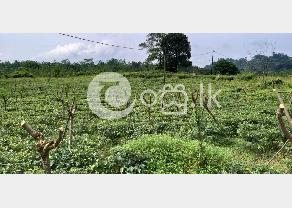 Valuable Land with Luxury Bungalow for Sale in Ratnapura in Ratnapura