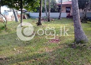 Valuable 17 Perch Coconut Land  in Negombo