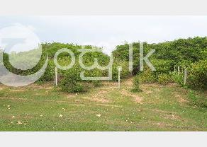 12 Acre Land for sale in Batticaloa in Batticaloa