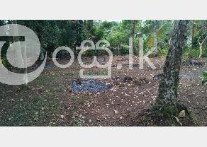 Pannipitiya  Weera Mawatha Land for Sale ( 18 Perches ) in Pannipitiya