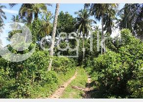 Large Land for Sale in Kalutara. in Kalutara
