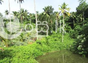 Eco Friendly Agricultural Land for Sale in Mirigama  Gampaha. in Mirigama