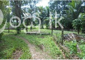 Land in Walahanduwa in Galle