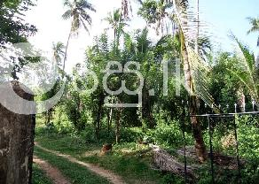 Well Cultivated 11 Acres Land for Sale in Matale. in Palapathwela