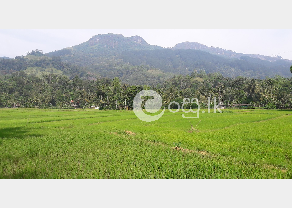 Land for sale in Nawalapitiya in Nawalapitiya