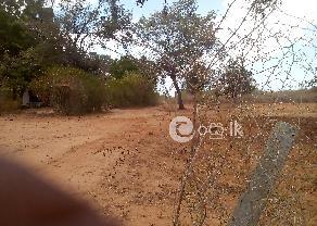 Land for Sale in Thissamaharama in Tissamaharama