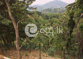 Land for sale in Gampola in Gampola