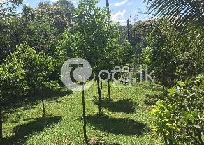Peradeniya   50 Perch Land For Sale  in Peradeniya