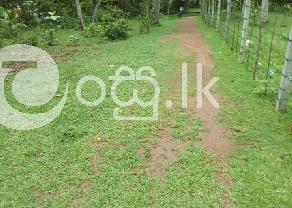 Land for sell in Minuwangoda