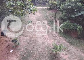 Valuable Land with House  in Homagama