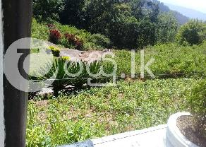 Beautiful Land with Bungalow for Sale in Haputhale in Haputhale