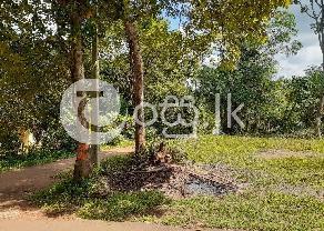 කුරුණෑගල පුත්තලම ප්රධාන මාර්ගයට 700 මීටර් දුරින් තිත්තවැල්ල in Kurunegala