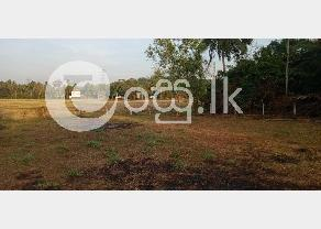 Land for sale in Narammala in Narammala