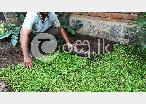 Professional landscaping by vikasitha gardens  in Colombo 5