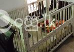 Cot for sale  in Kandy