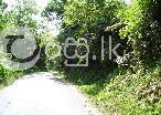 5 Acre Land in Kandy  in Kadugannawa