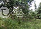 3.5 Acres Land with a House in Nikaweratiya in Nikaweratiya