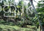 1 Acre Coconut Estate at Bandaragama Kalutara in Bandaragama